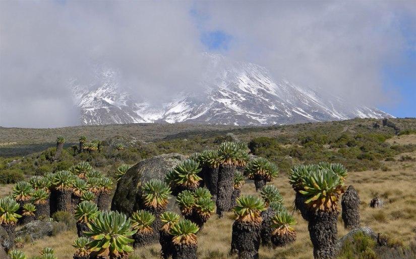Mt. Kilimanjaro ExpeditionPlan