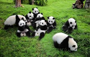Sichuan-Wolong-National-Panda-Natural-Reserve