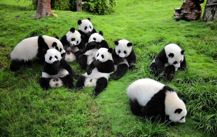 Sichuan-Wolong-National-Panda-Natural-Reserve.jpg